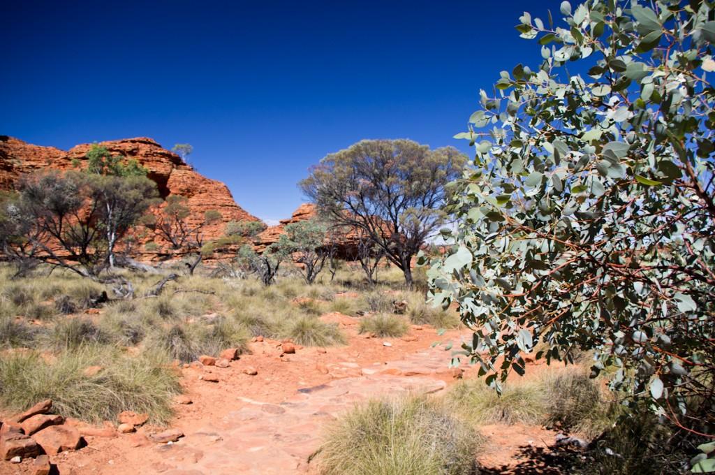 Oasis au milieu du désert