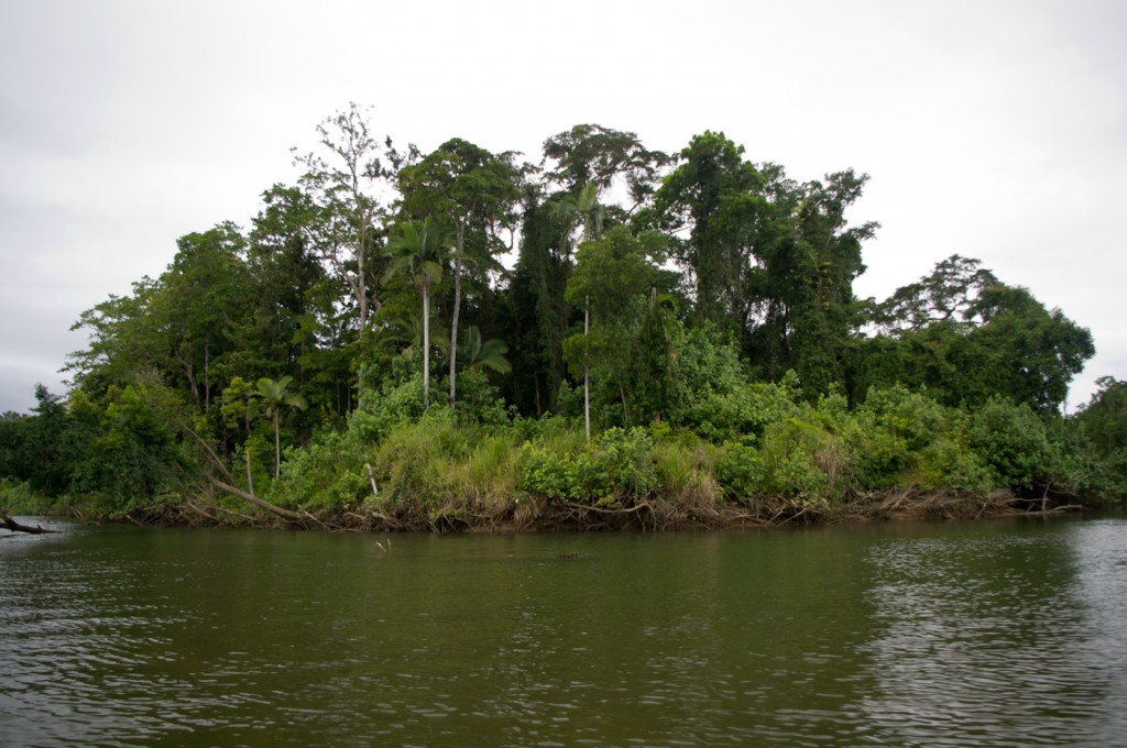 Direction la mangrove